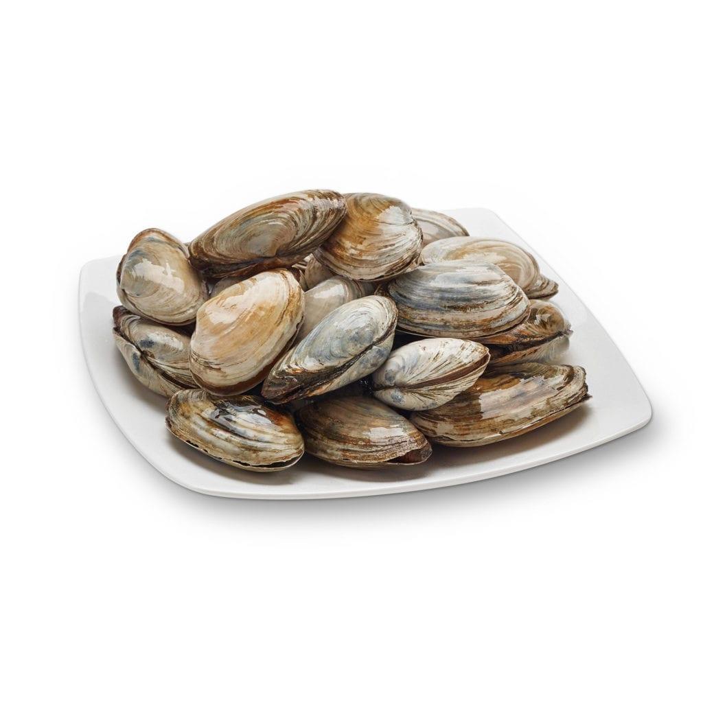 Maine clams
