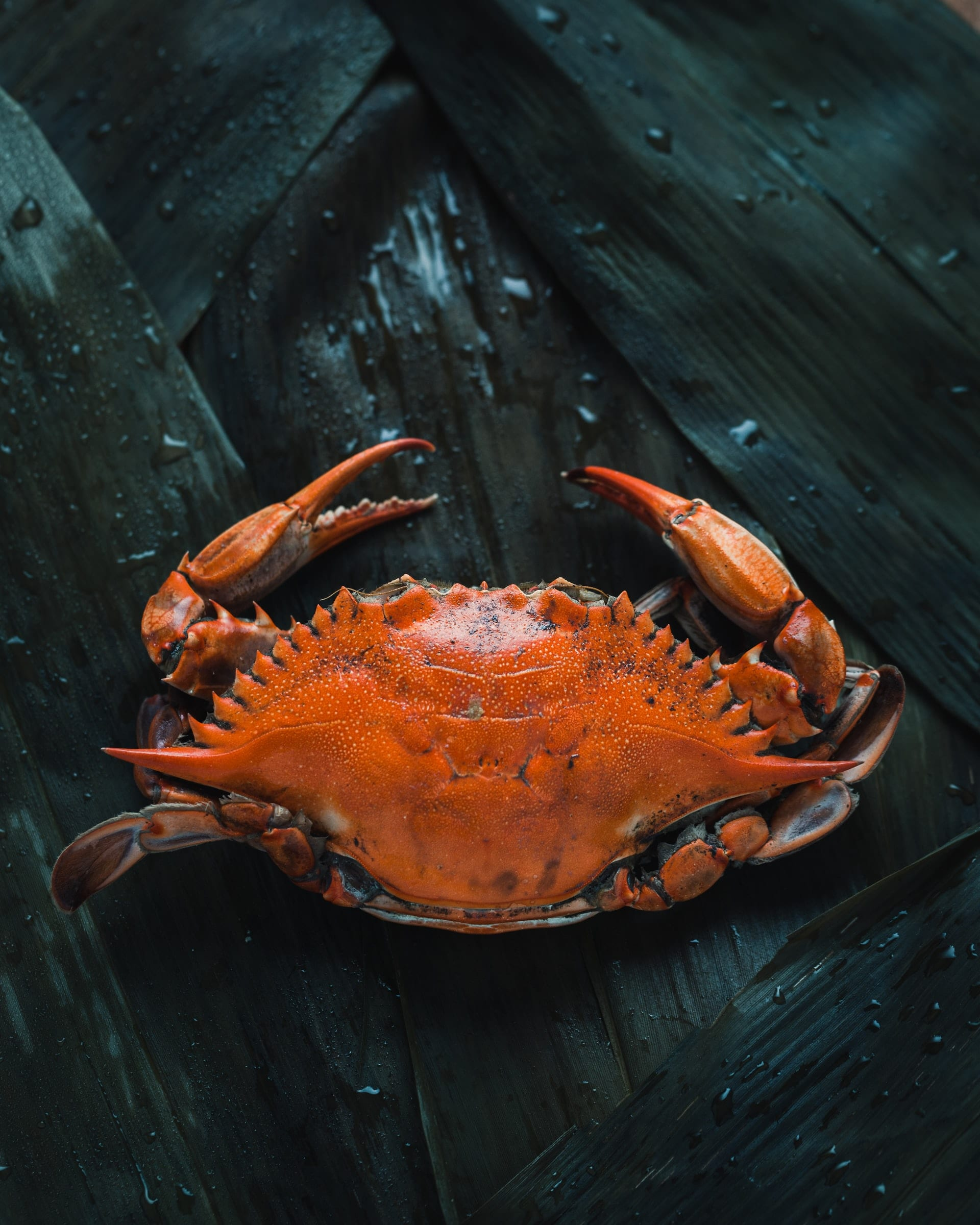 When is Crab Season in Maine?