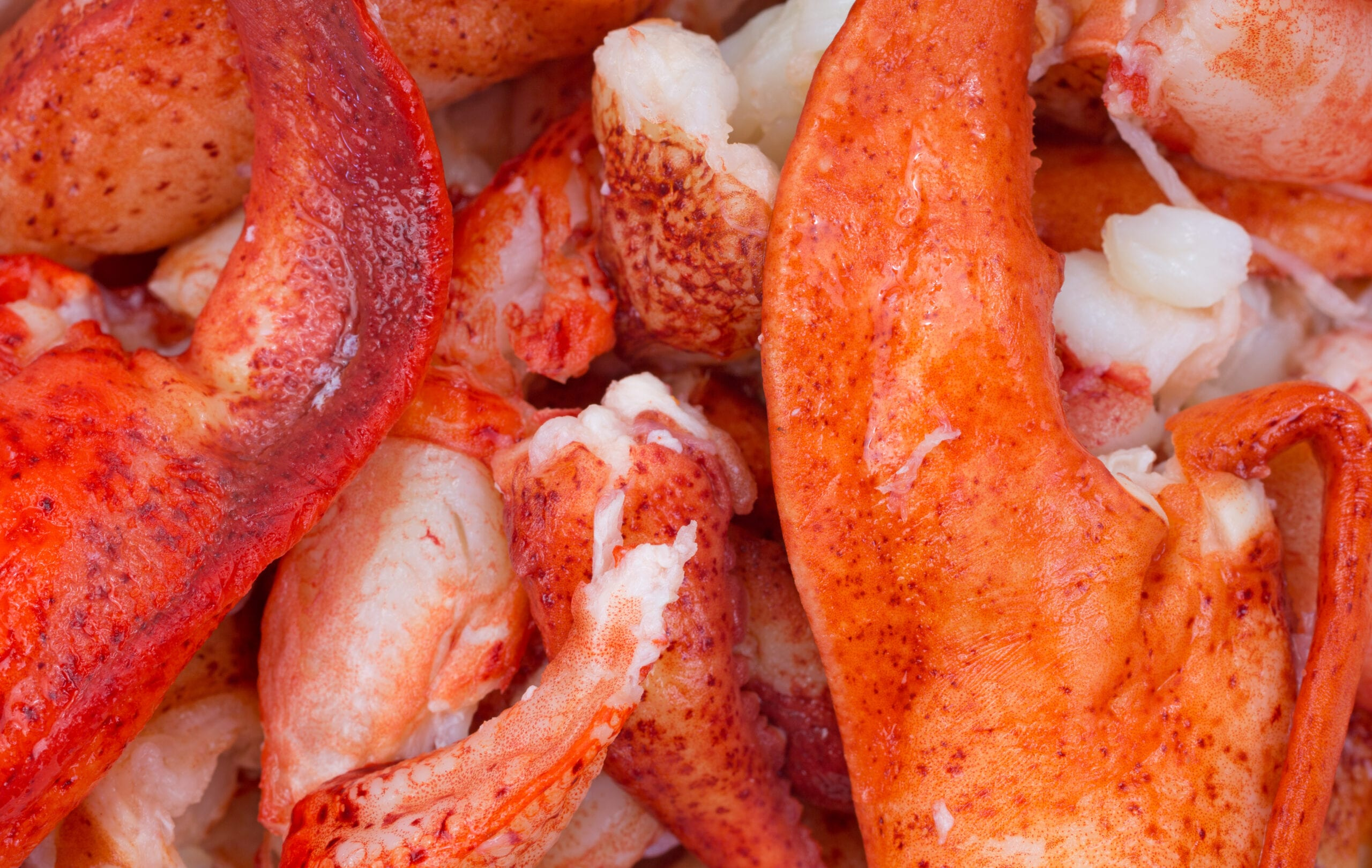 Where to Get the Best Fresh Picked Maine Lobster Meat