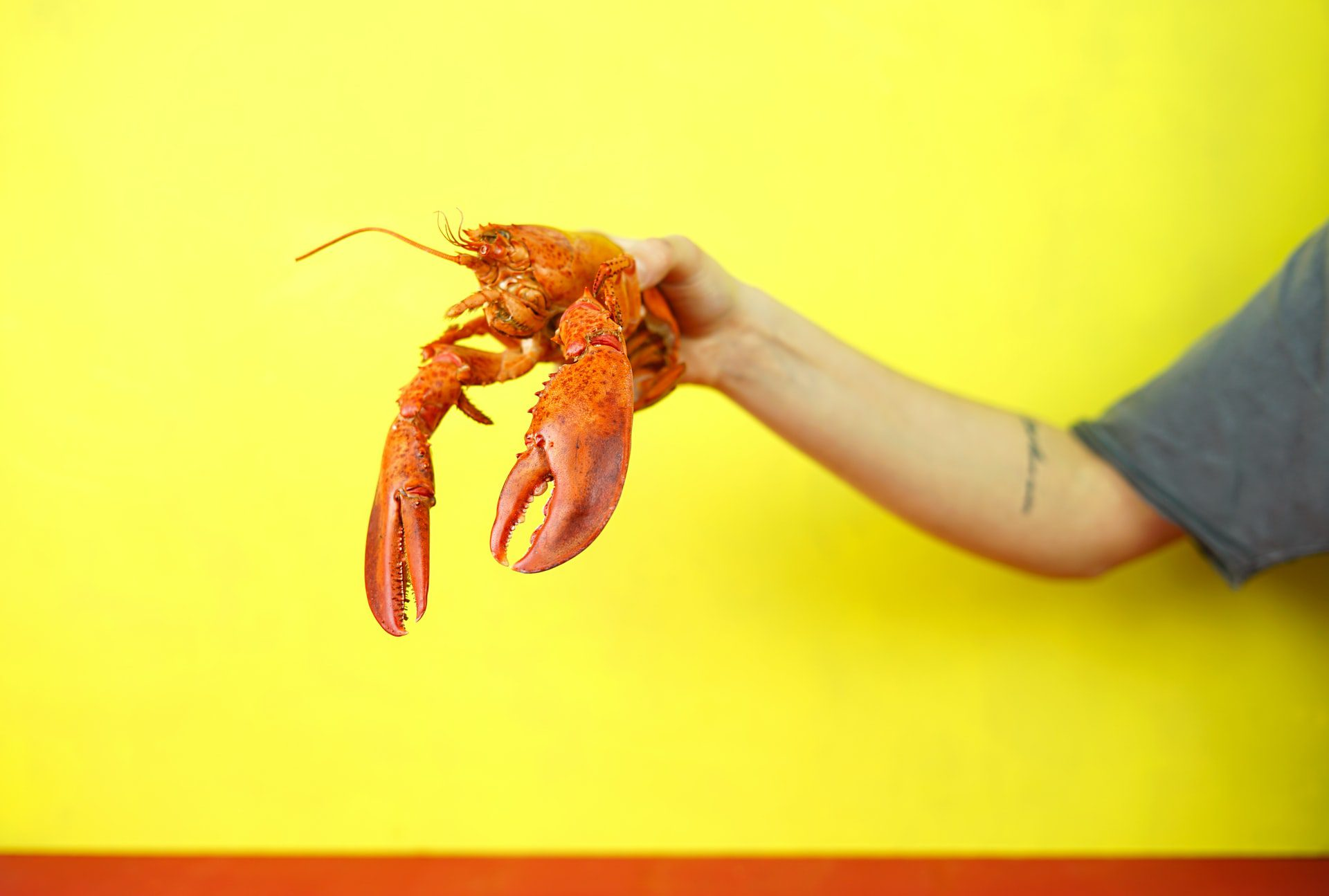 Live Lobsters Delivered Straight to Your Door- Now What?